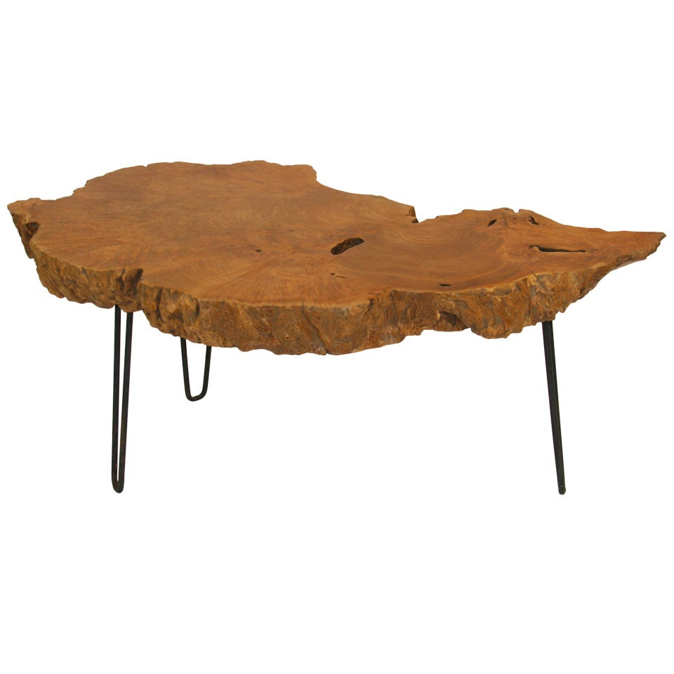 Live Edge Burl Root Table on Steel Hairpin Legs