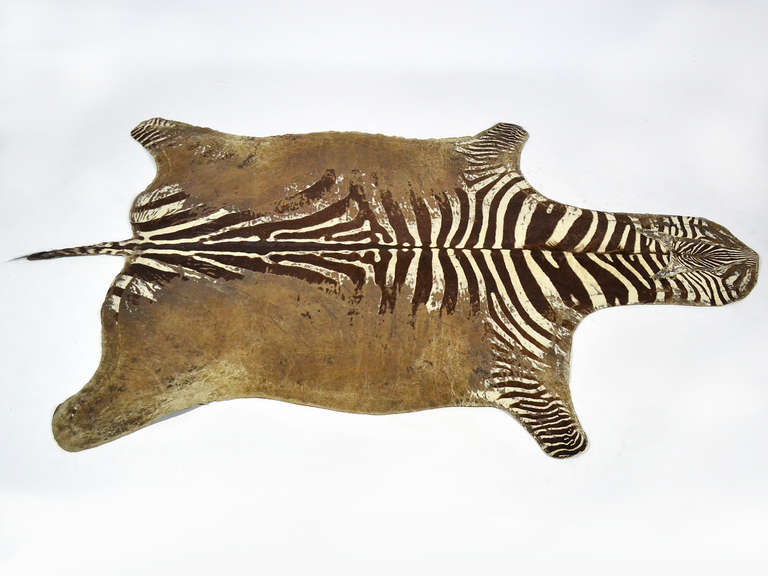 Distressed Antique Burchell Zebra Hide Rug At 1stdibs