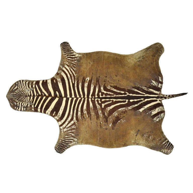 Captivating Distressed Antique Burchell Zebra Hide Rug 1