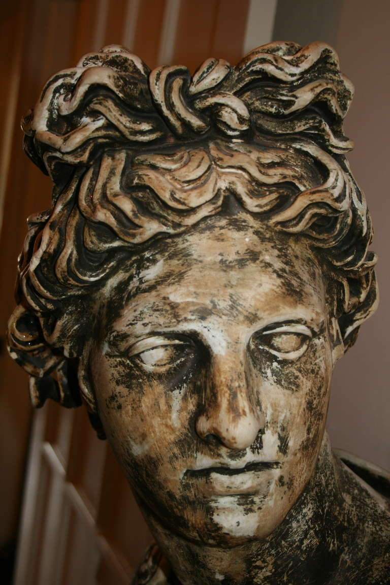 Large Plaster Bust of Apollo Belvedere 4