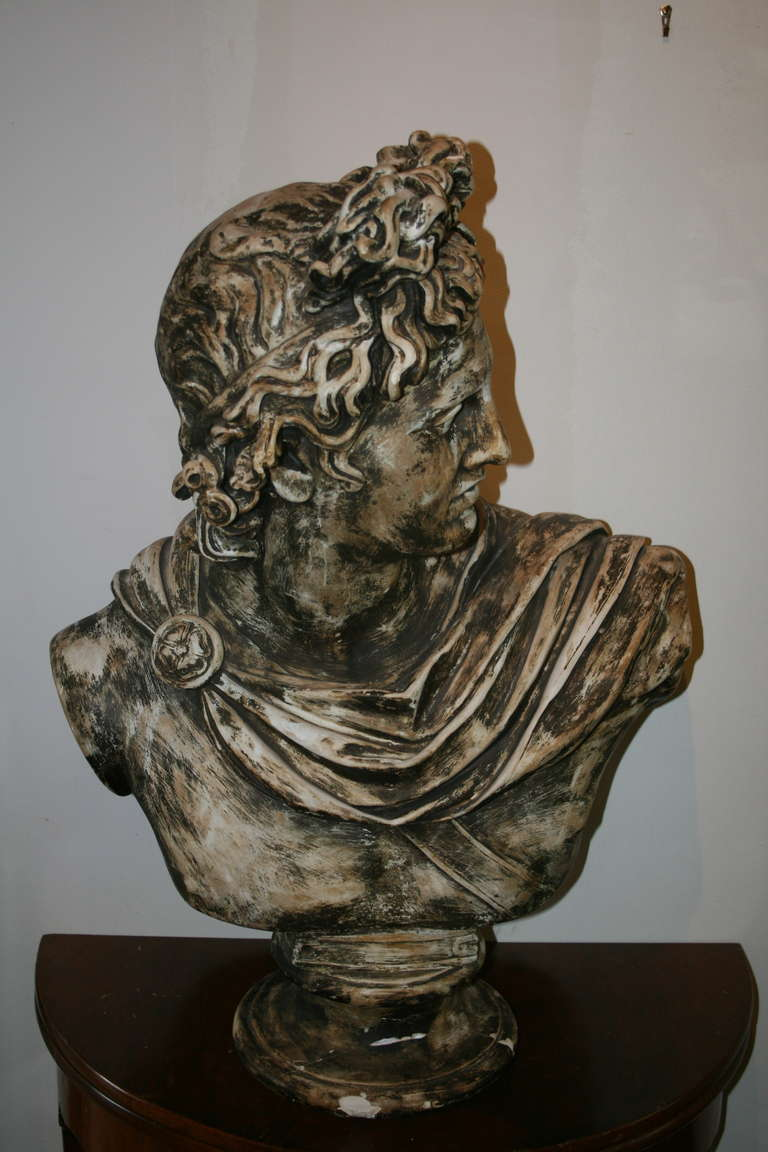 Large Plaster Bust of Apollo Belvedere 2