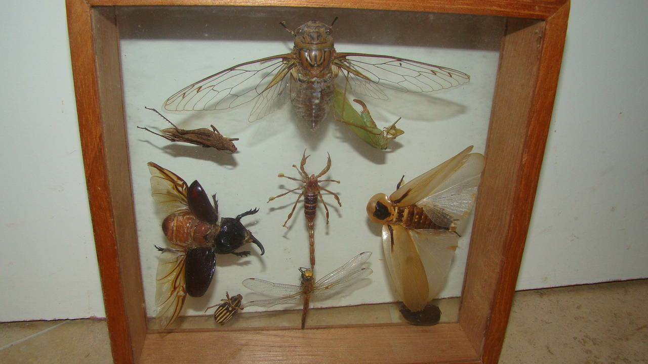 Insects Specimen Wall Hanging Sculpture Box At 1stdibs