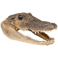 Vintage Alligator Head