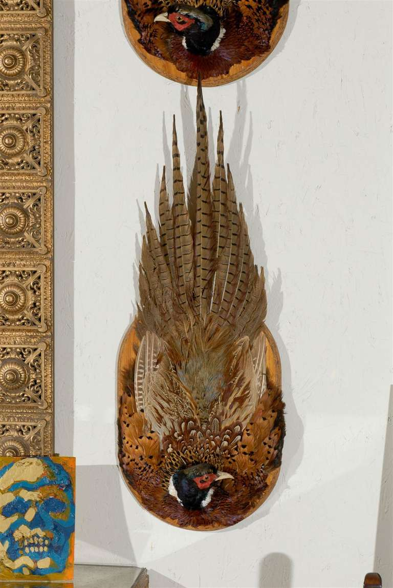 Pair Of Pheasant Plaque Wall Mounts At 1stdibs