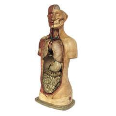 Rare Italian Anatomical Model of a Man Bust.