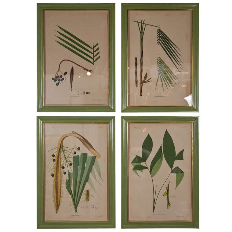 Images Of Brazilian Palms by Joao Rodrigues For Sale