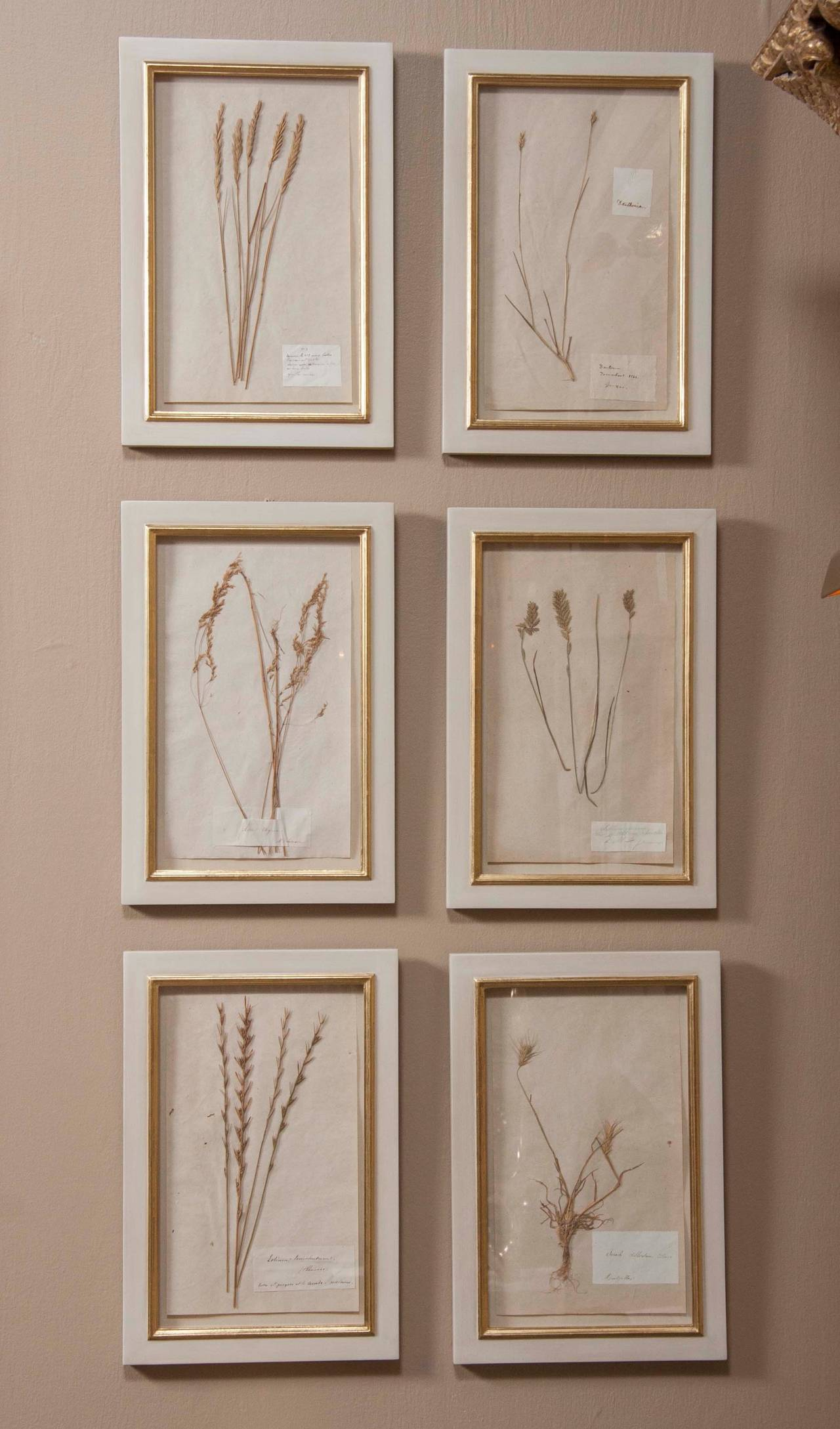 A set of French, 19th century Herbiers, seven available, newly framed. 