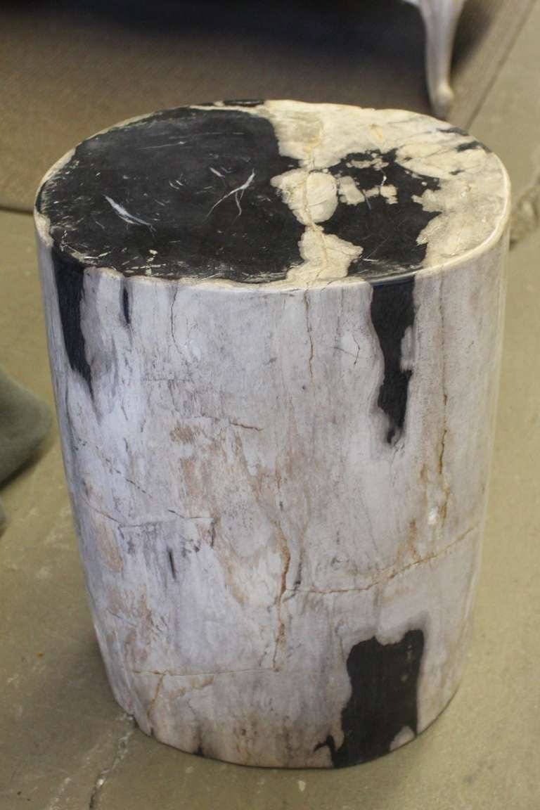 Petrified Wood Side Table ~ Petrified wood as side table or stool at stdibs
