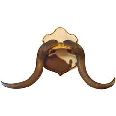 Handlebar Moustachesque Antlers on Hide Shield