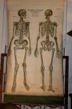 Anatomical Chart image 2