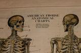 Anatomical Chart image 3