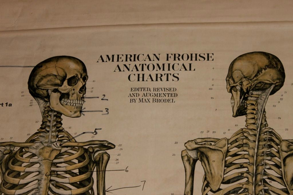 Anatomical Chart 3