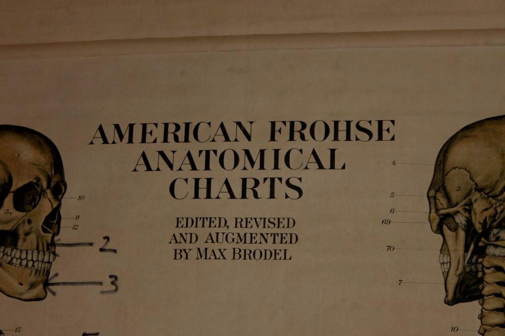 Anatomical Chart 4