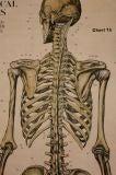 Anatomical Chart image 5