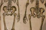 Anatomical Chart image 6