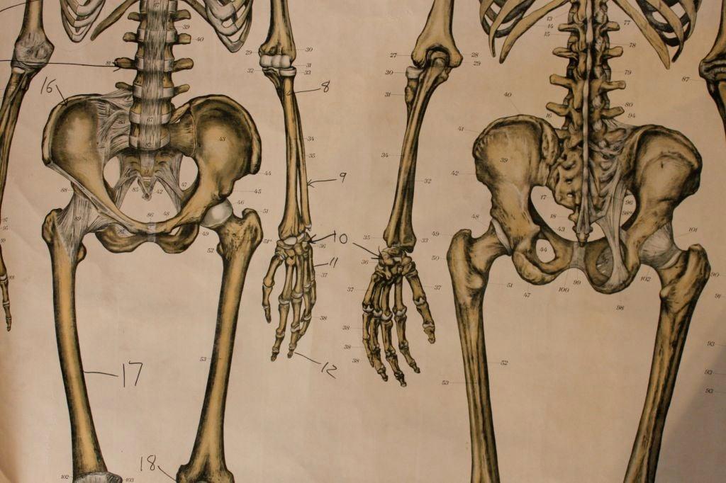 Anatomical Chart 6