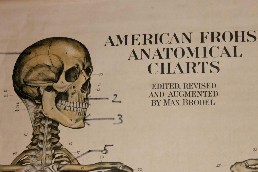 Anatomical Chart 8