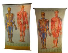 Two Large Vintage Anatomy Charts