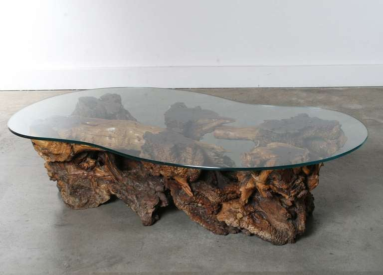 california burl wood coffee table with amoeba glass top at 1stdibs