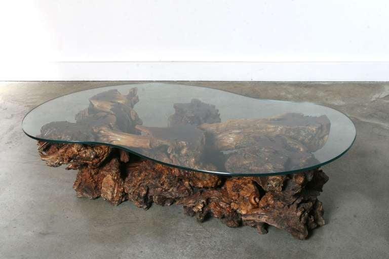 California Burl Wood Coffee Table with Amoeba Glass Top 7