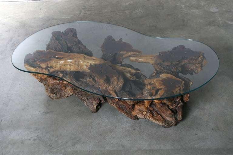 California Burl Wood Coffee Table with Amoeba Glass Top 3