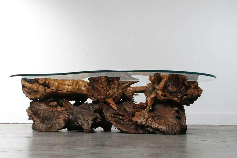 California Burl Wood Coffee Table with Amoeba Glass Top 4