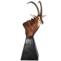 Pedestal Sable Mount