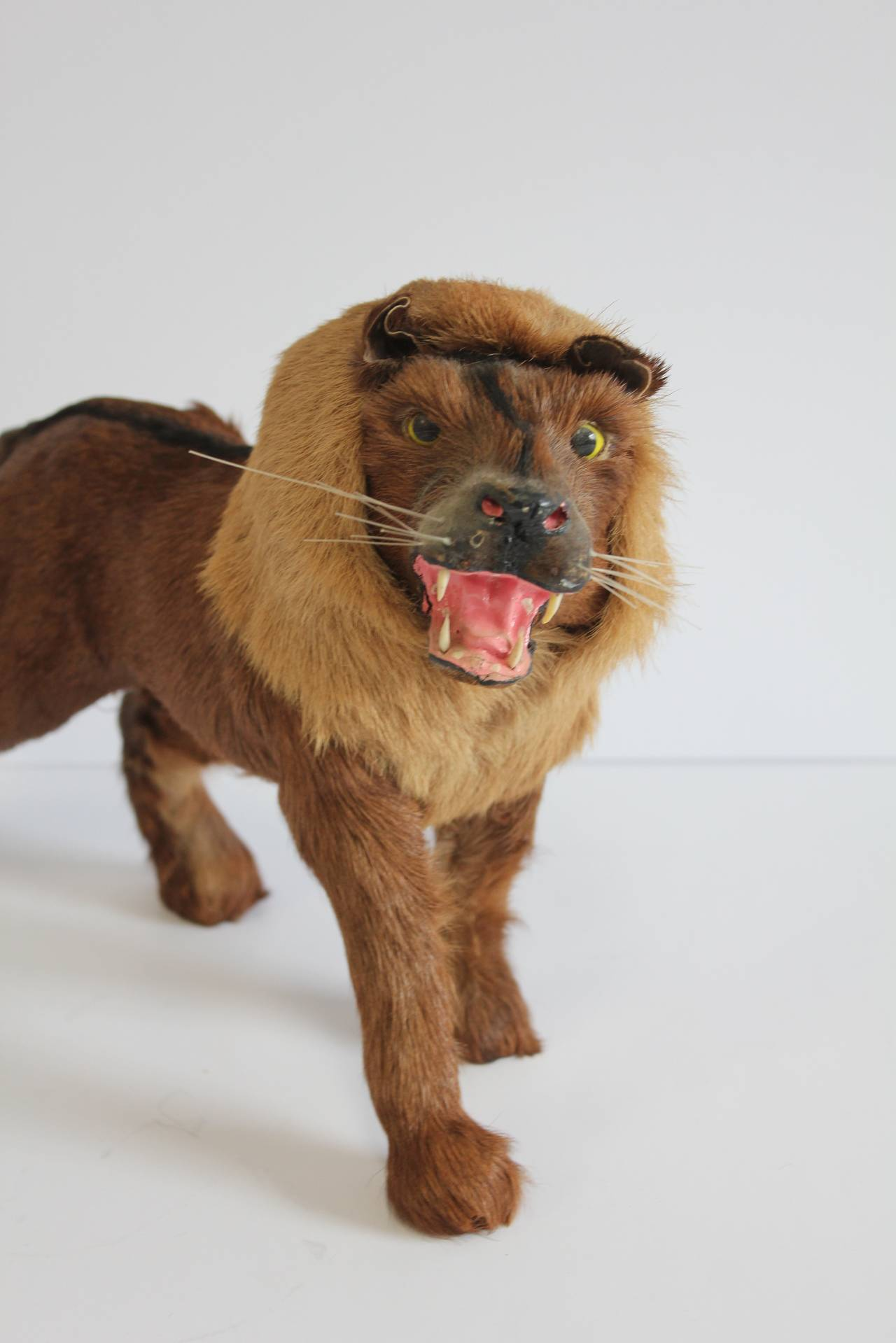 Antique Victorian Miniature Taxidermy At 1stdibs