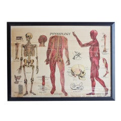 1900's Anatomy Chart by James McConnell