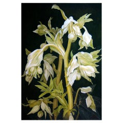 Golden Green - Hellebores:  a large scale work by Sophie Coryndon