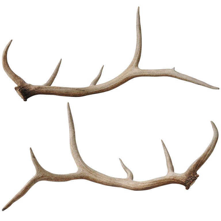 elk antlers graphic - photo #1