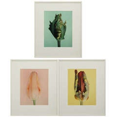Set of three photo images from the Tulip series by Wiedeman
