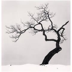 """""""Kussharo Lake Tree, Kotan, Hokkaido, Japan"""" by Michael Kenna"""