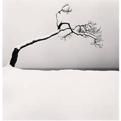 """Kussharo Lake Tree, Study 2, Kotan, Hokkaido"" by Michael Kenna"
