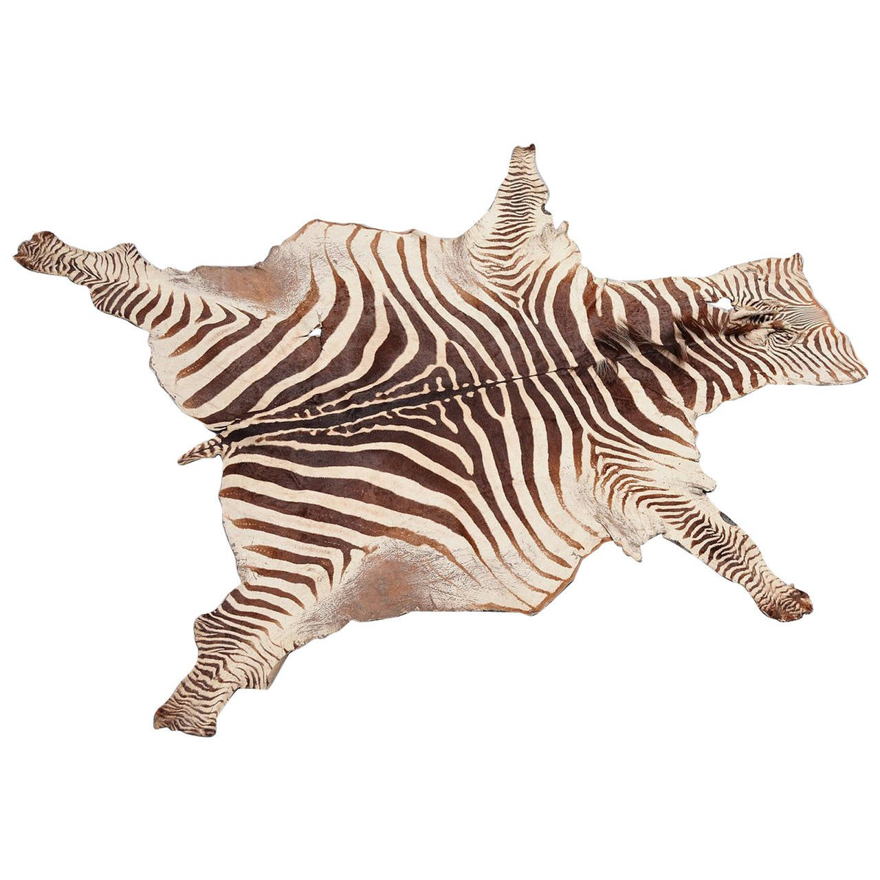 Zebra Sculpture Area Rug: Zebra Hide Trophy Rug Tanzania 1950 At 1stdibs