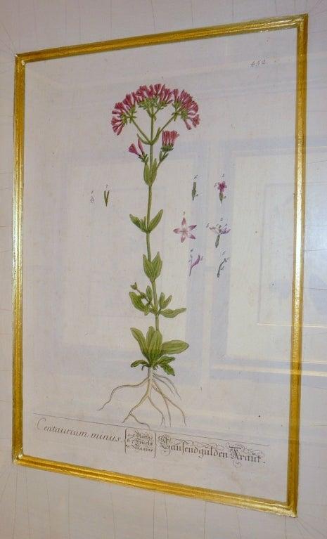 English Botanical Prints Set Of 4 At 1stdibs