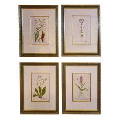 English Botanical Prints Set of 4