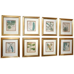 English Botanical Prints Set of 8
