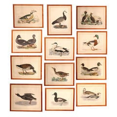 Set of Twelve Framed, Hand-Colored Prints of Birds by Selby & Mitford