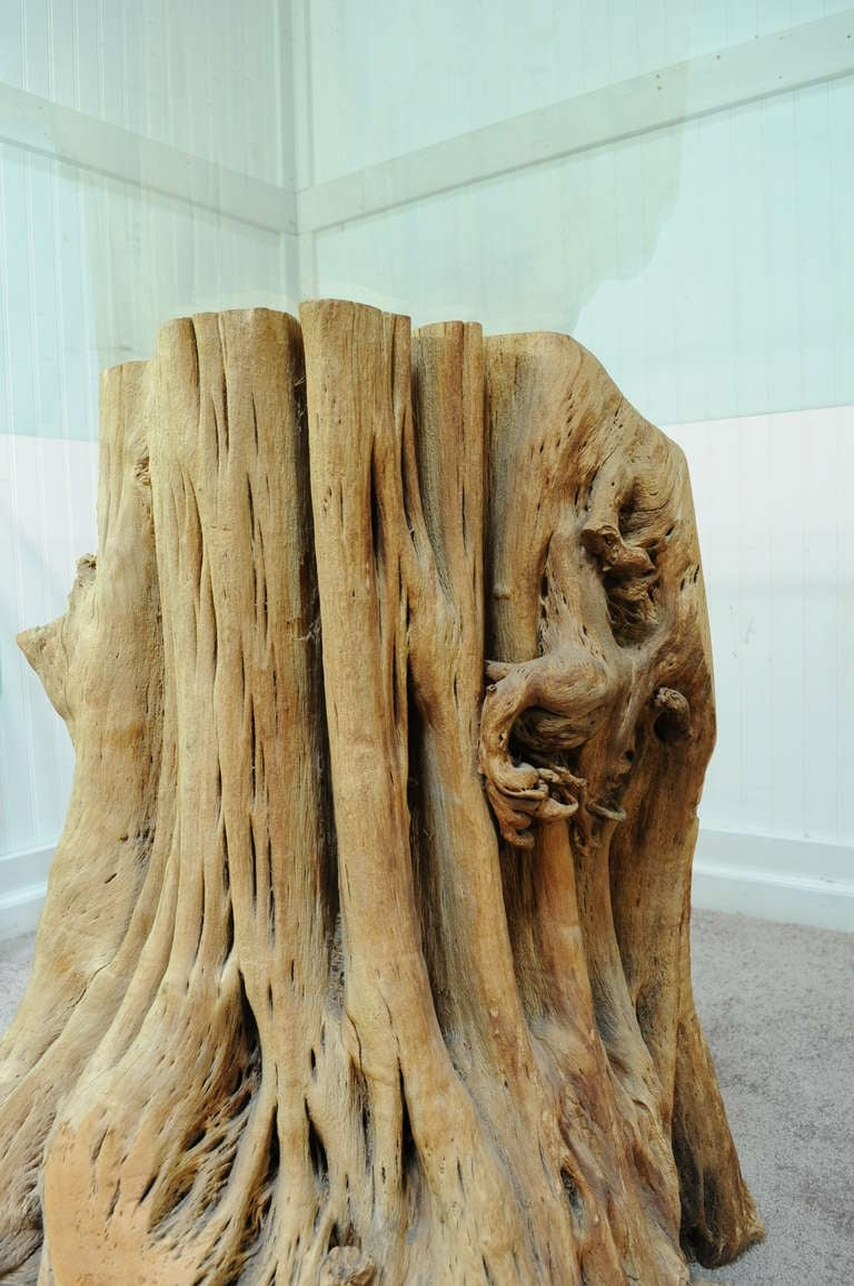 Naturalistic Free Form Japanese Cypress Tree Root Glass