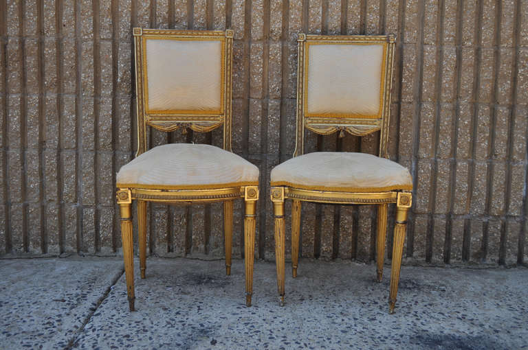 Remarkable pair of Antique 19th Century French Louis XVI Style gold gilt  wood drape and tassel - French Louis XVI Style Gold Gilt Wood Tassel Decorated Boudoir