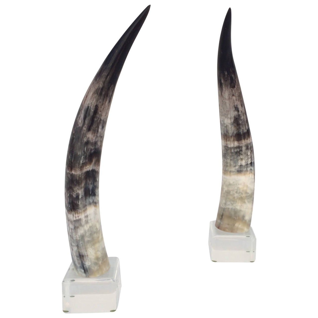 Pair of Mounted Steer Horns on Acrylic Bases