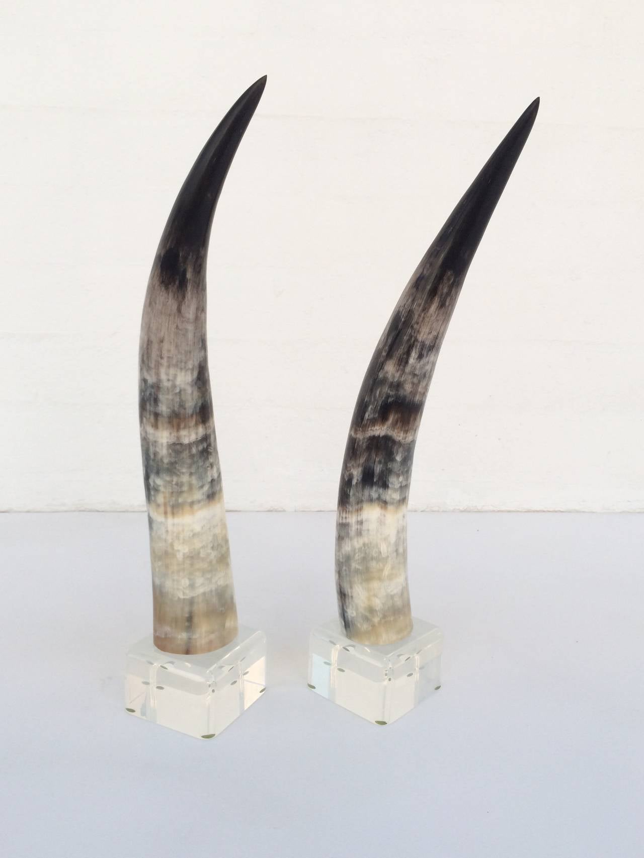 Pair of mounted steer horns on acrylic bases for sale at 1stdibs pair of mounted steer horns on acrylic bases 3 sciox Choice Image