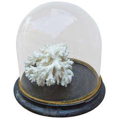 Vintage Coral Display
