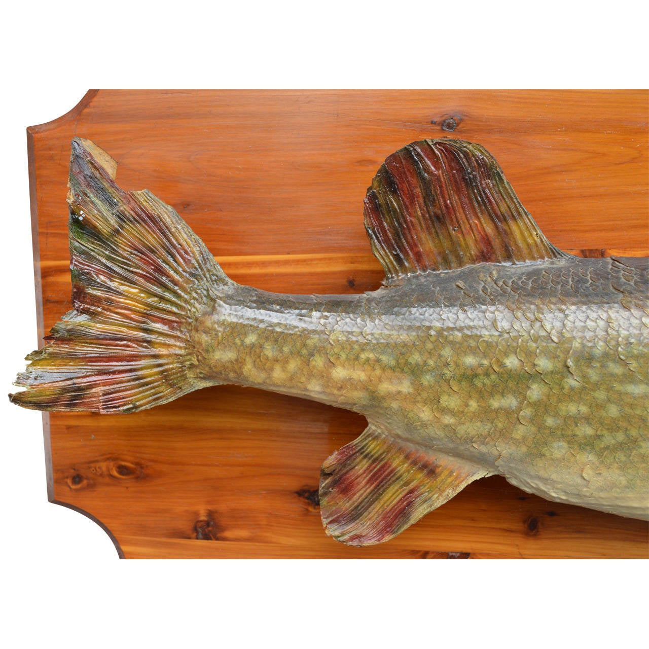 Pair of mounted taxidermy fish at 1stdibs for L fish furniture