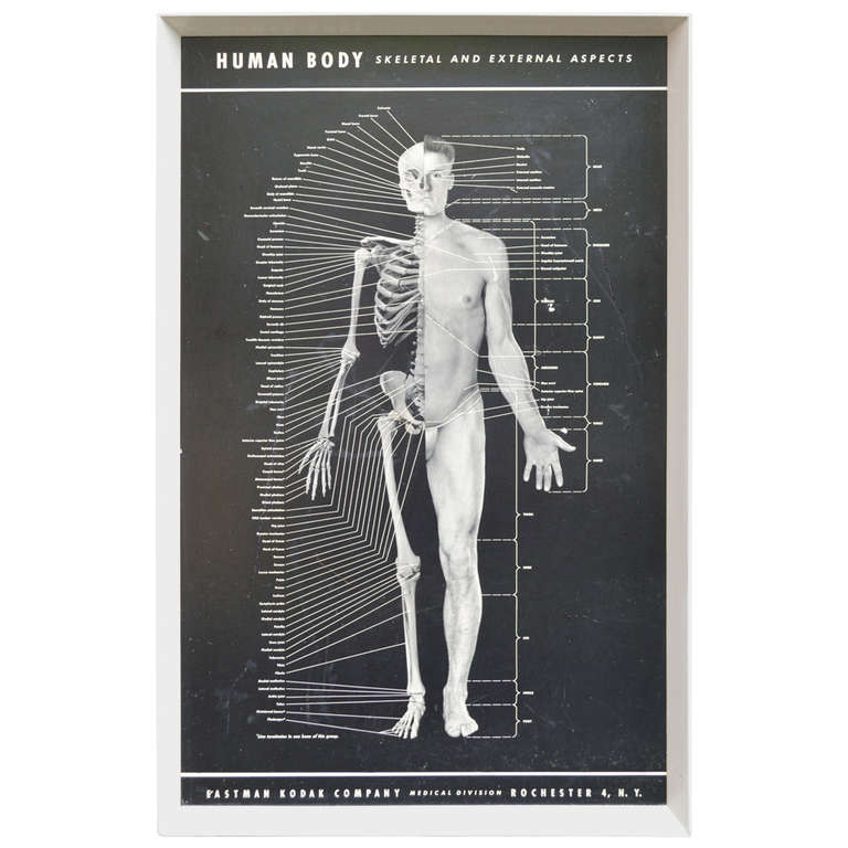 Early Human Body Poster By Eastman Kodak Company At 1stdibs