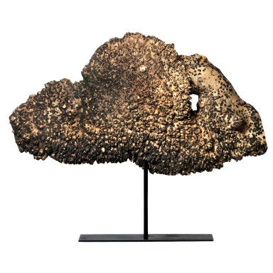 Large Maple Burl Cap on Stand