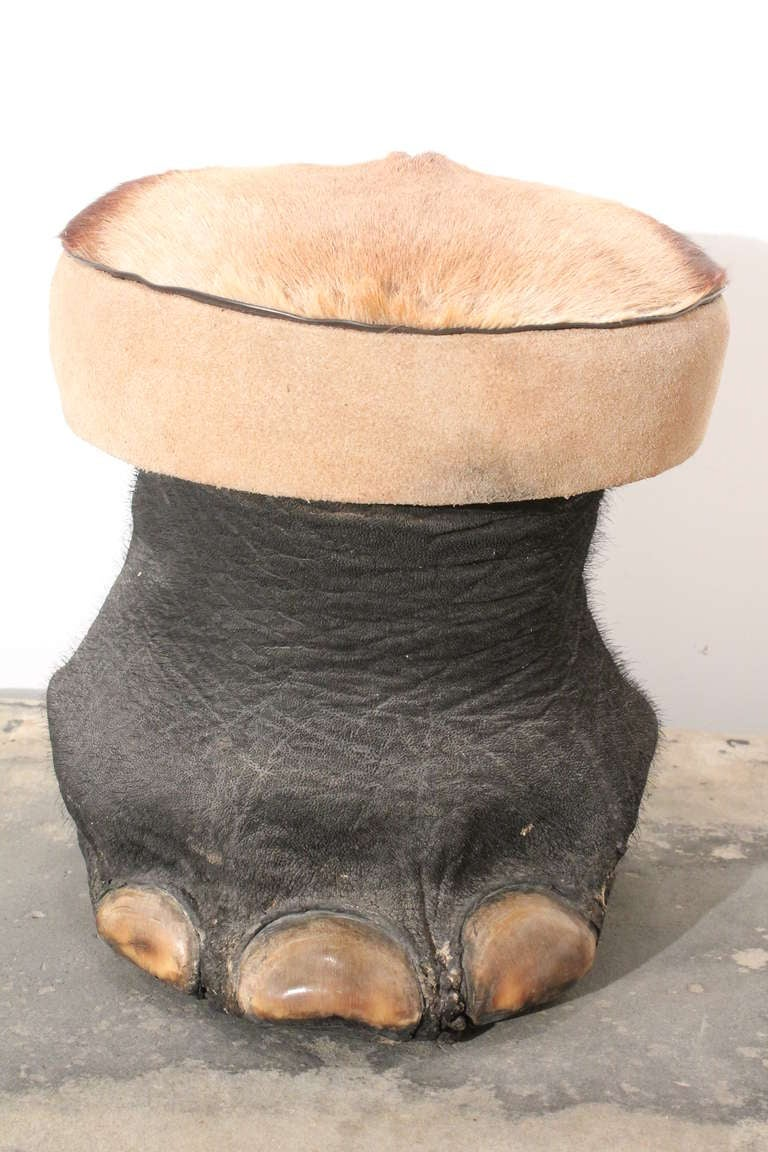 Elephant Foot And Gazelle Hide Stool At 1stdibs