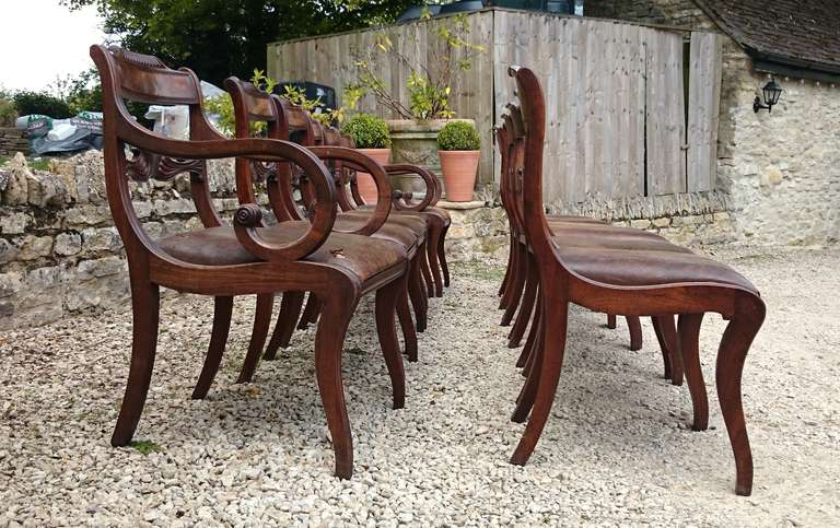 13 Regency Mahogany Antique Dining Chairs For Sale 1 - 13 Regency Mahogany Antique Dining Chairs At 1stdibs