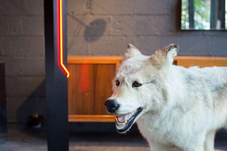 American Alaskan Tundra Wolf For Sale